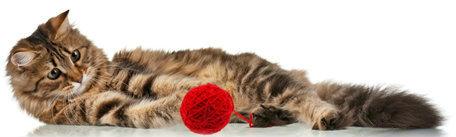 Det är viktigt att EN hund/katt varit i kontakt med det ni spar som smeller.