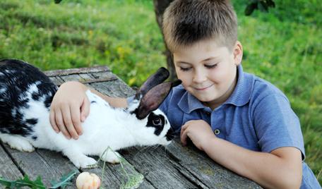 allergisk mot kanin